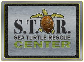 Learn How to Save a Sea Turtle!