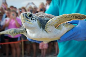 Nest Release 8-3-15 OBX Life Photography7 Augie