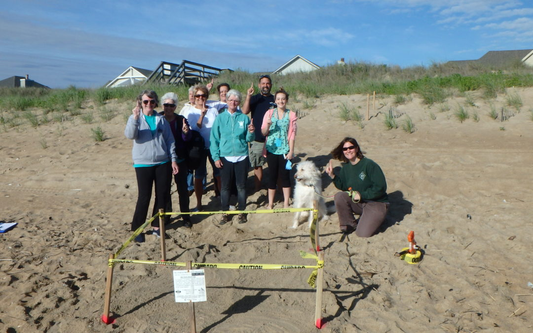 N.E.S.T. FIRST sea turtle nest for 2016