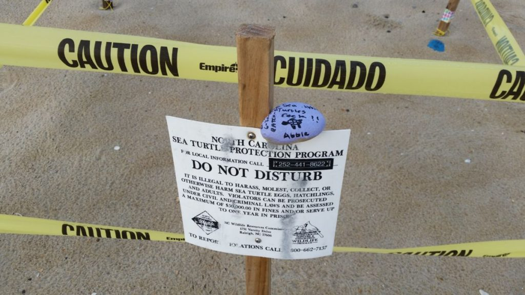 """One of our young finders of a sea turtle nest left her """"turtles rock"""" rock and is a member of the Adopt-A-Nest club."""