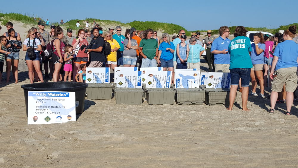 Turtles and onlookers anxiously await the release