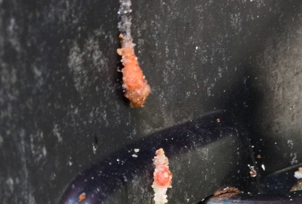 ATV Attacked By Pink Slime