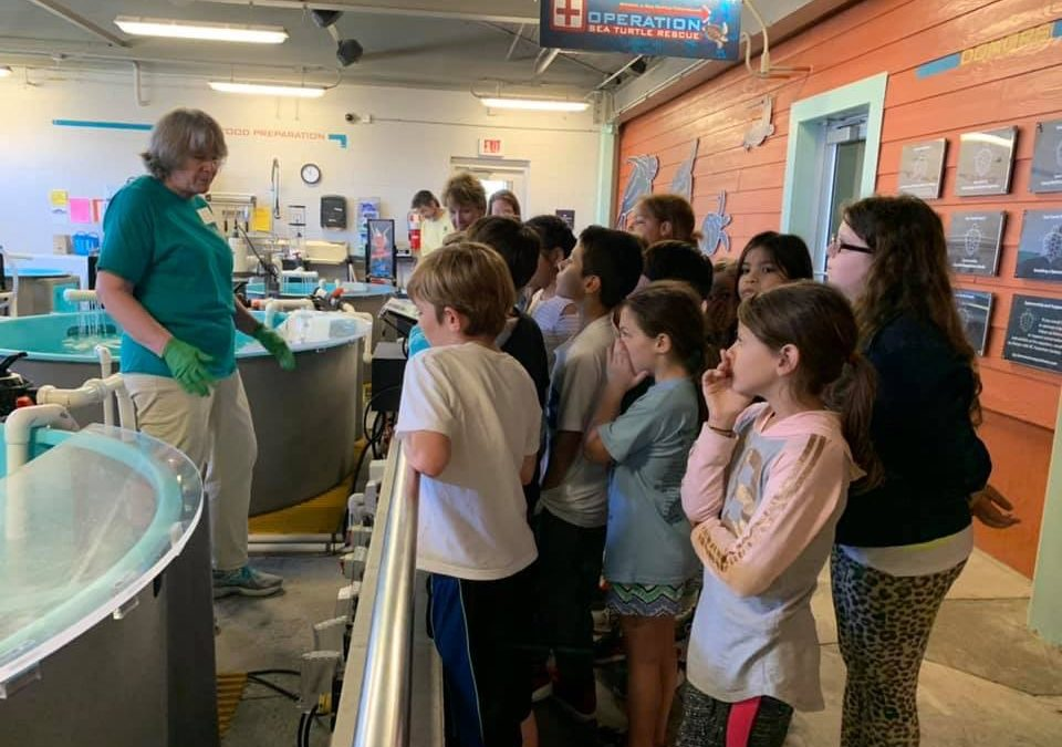 A BANNER SCHOOL YEAR FOR SEA TURTLES
